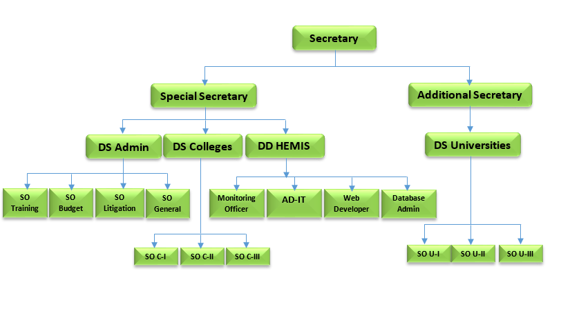 HED-Organogram-Green